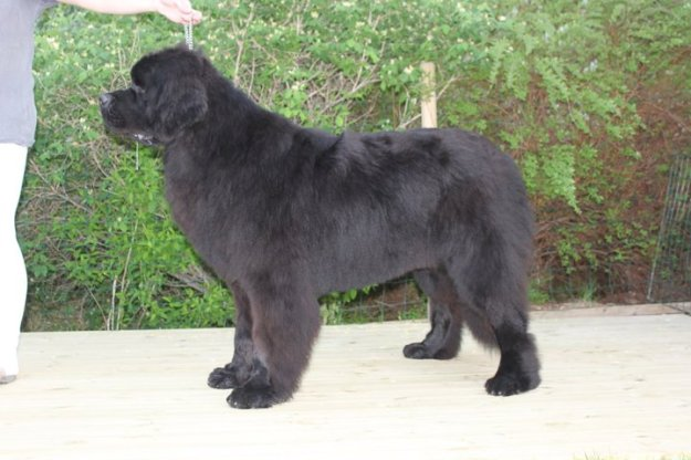 Bison 11 months