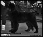 Tara BIS-1 puppy