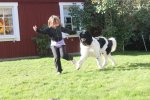 Showtraining with Alva 12 months