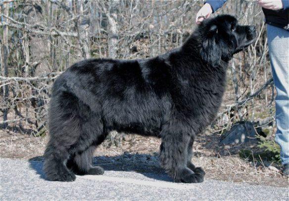 Krambjörnen's Magica De Hex, 9 years