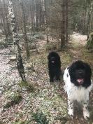 älskar skogen